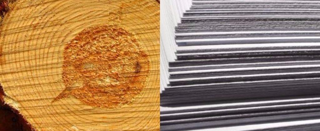 Holz-/ Papierindustrie